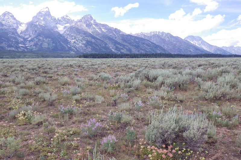 Sagebrush plains in front of tall mountains